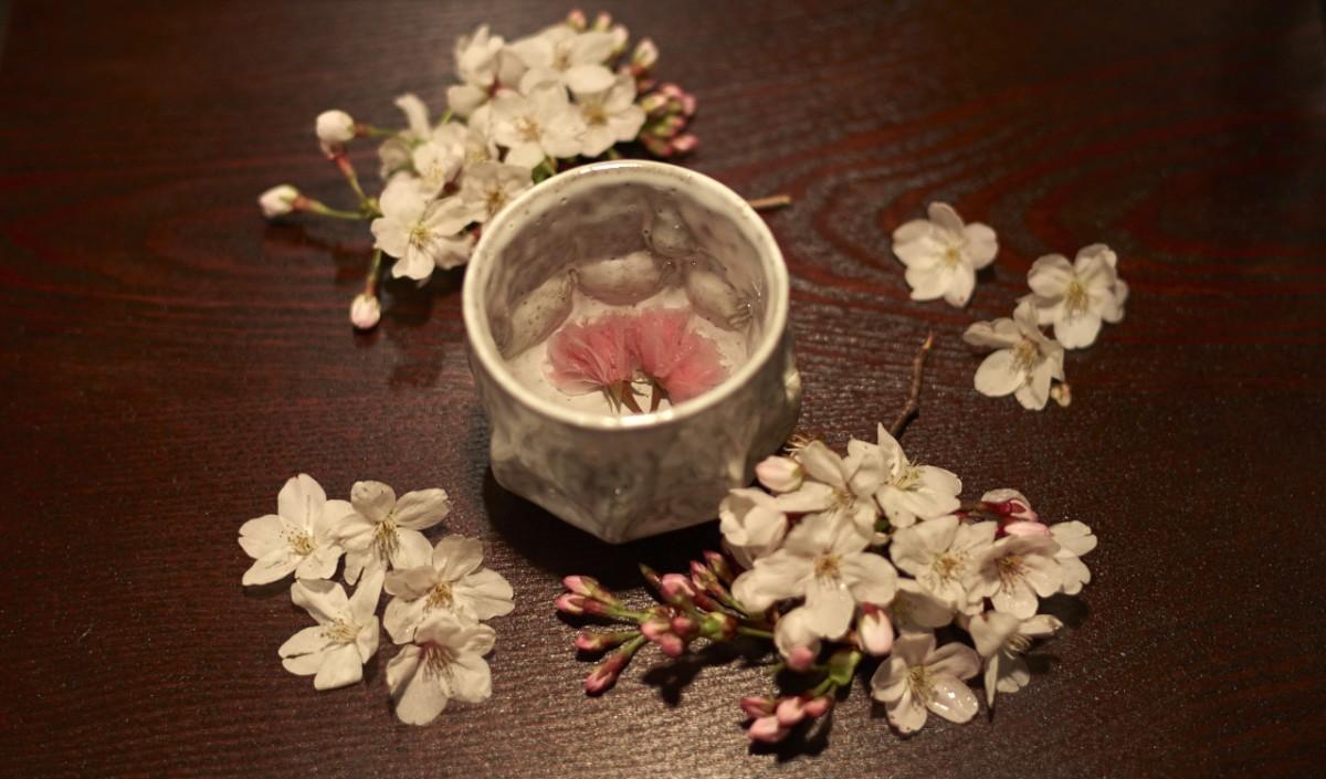 Sakura Gossip