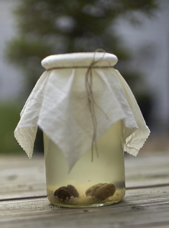 Fermenting water kefir
